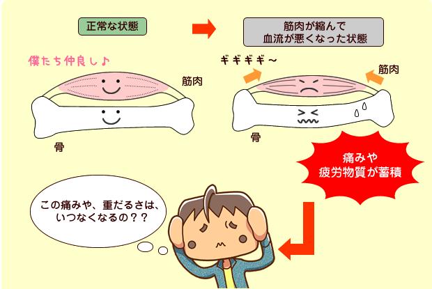 筋肉の縮み